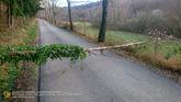 191210_einsatz_sturmschaden_001.jpg